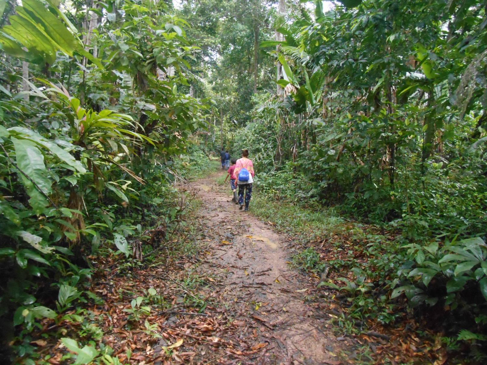 Amazonía: despertar a la vida